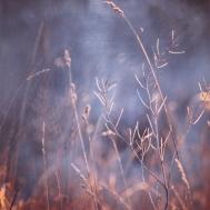 amanda-kay-photo-004