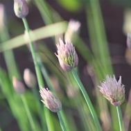 amanda-kay-photo-006