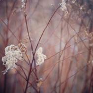 amanda-kay-photo-013