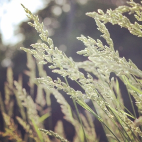 amanda-kay-photo-019