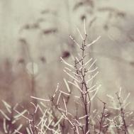 amanda-kay-photo-029