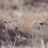 amanda-kay-photo-030